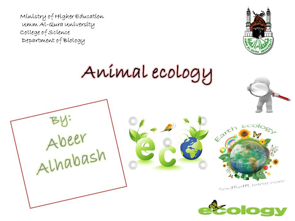 Animal ecology Abeer Alhabash By: Ministry of Higher Education