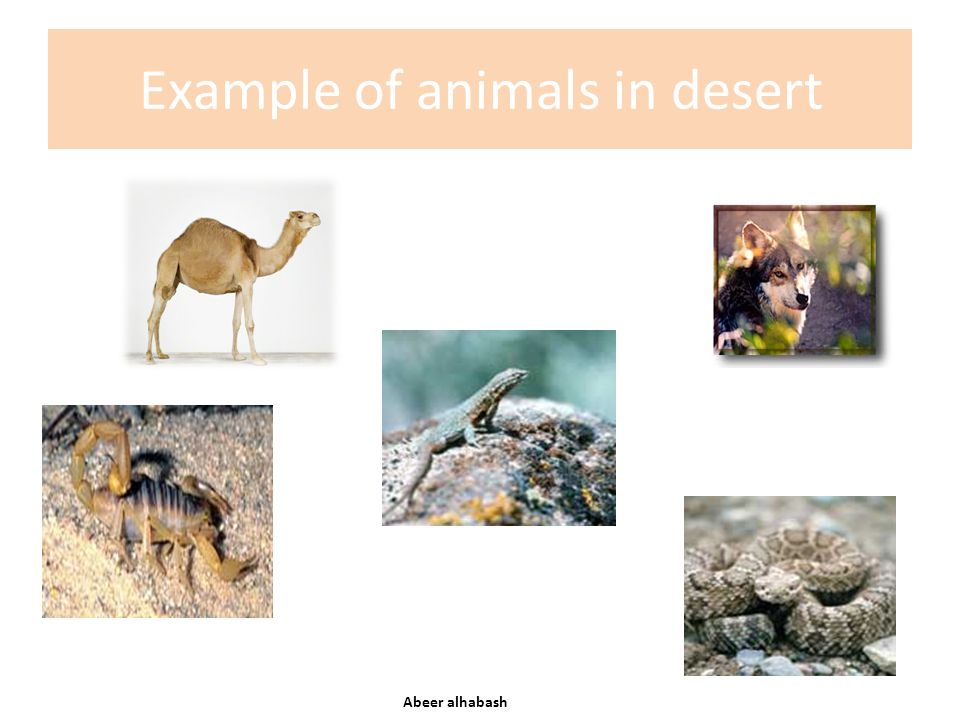 Example of animals in desert