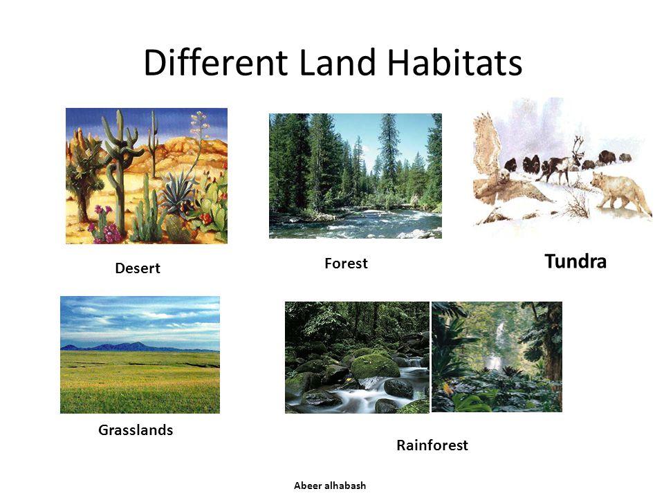 Different Land Habitats