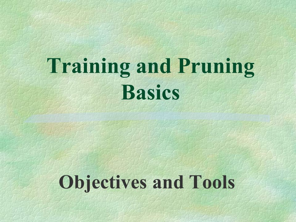 Training and Pruning Basics