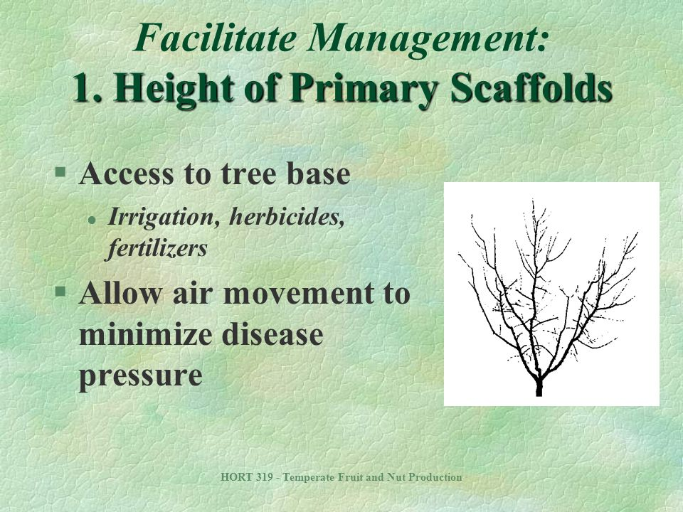 Facilitate Management: 1. Height of Primary Scaffolds