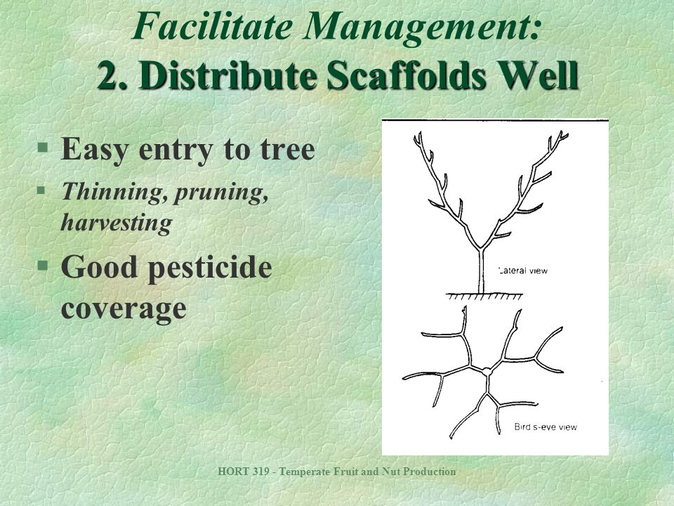 Facilitate Management: 2. Distribute Scaffolds Well