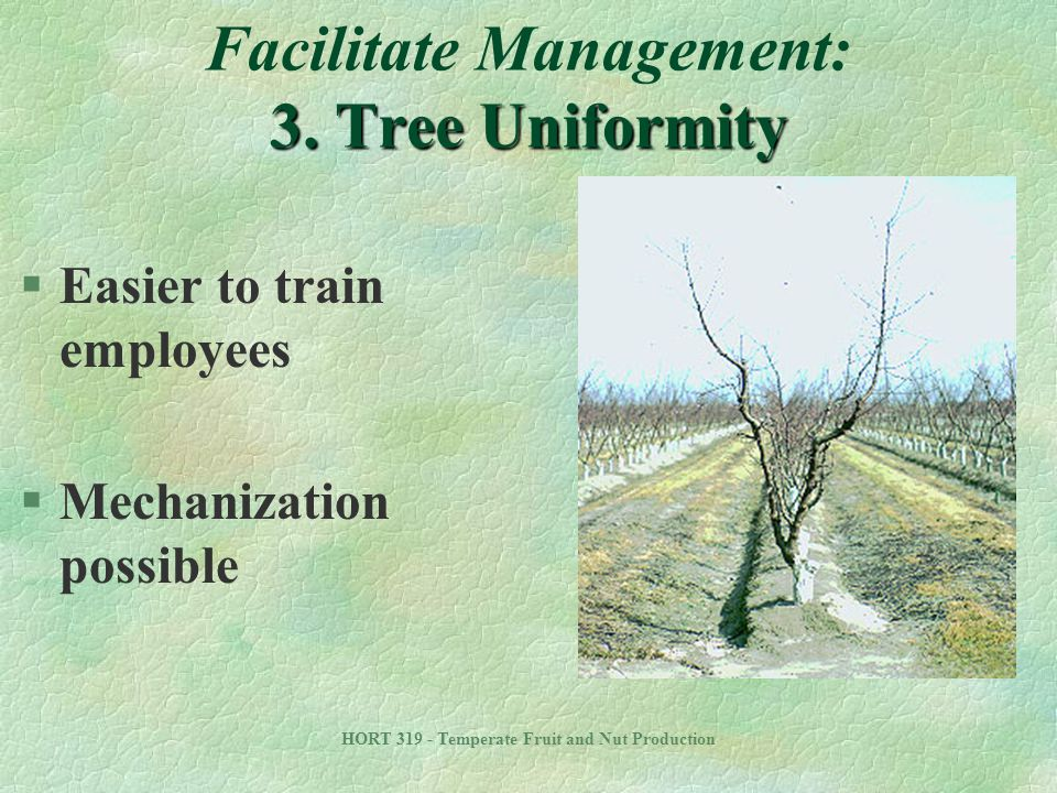 Facilitate Management: 3. Tree Uniformity