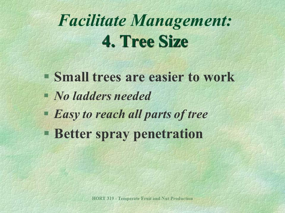 Facilitate Management: 4. Tree Size