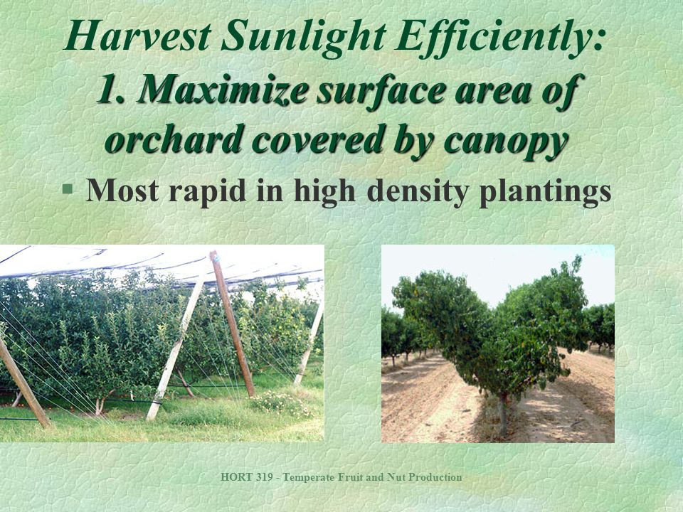 Harvest Sunlight Efficiently: 1