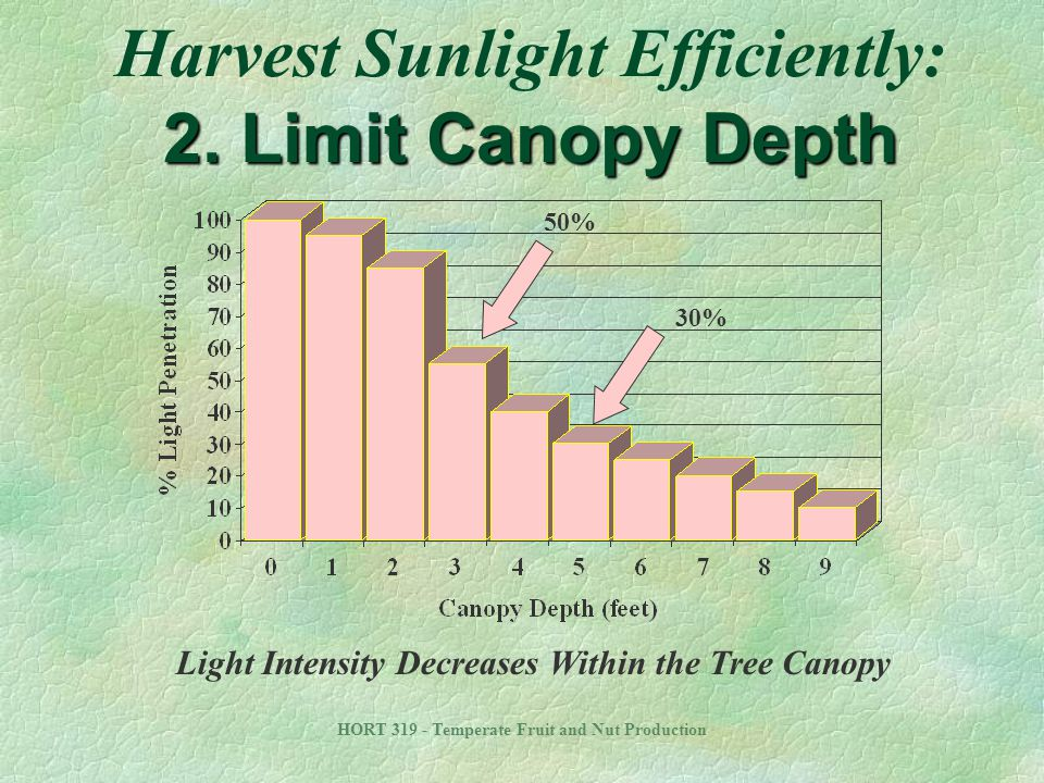 Harvest Sunlight Efficiently: 2. Limit Canopy Depth