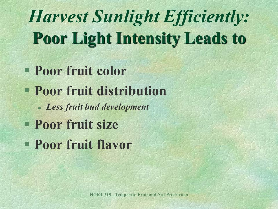 Harvest Sunlight Efficiently: Poor Light Intensity Leads to