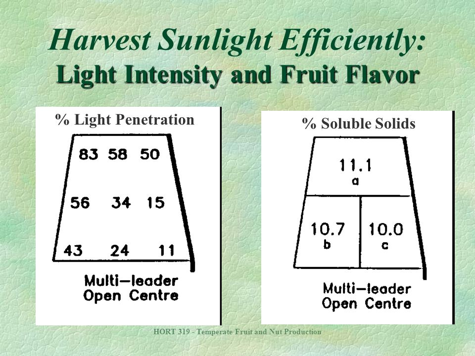 Harvest Sunlight Efficiently: Light Intensity and Fruit Flavor