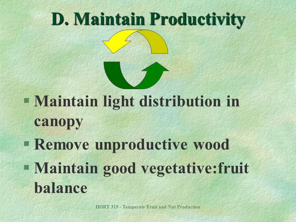 D. Maintain Productivity