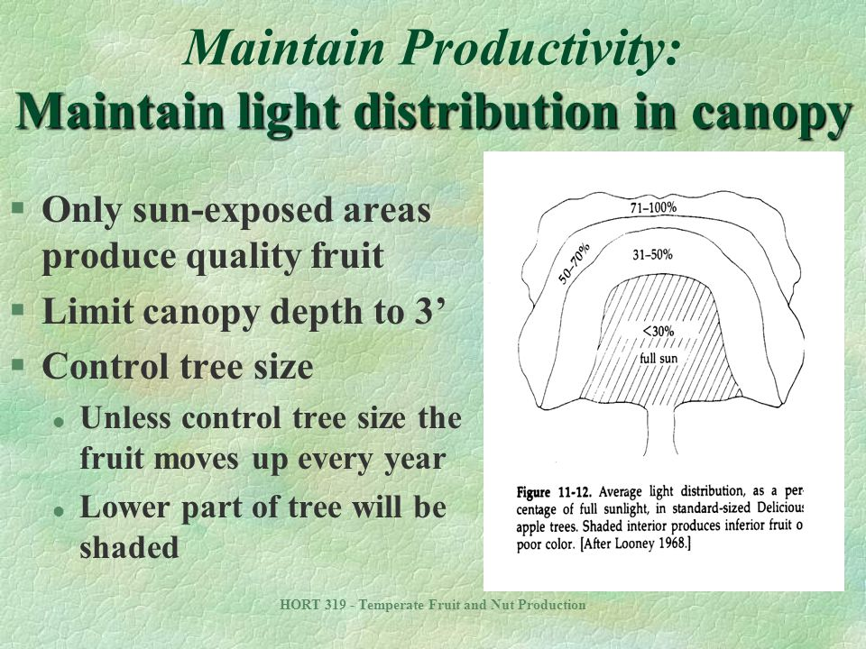 Maintain Productivity: Maintain light distribution in canopy