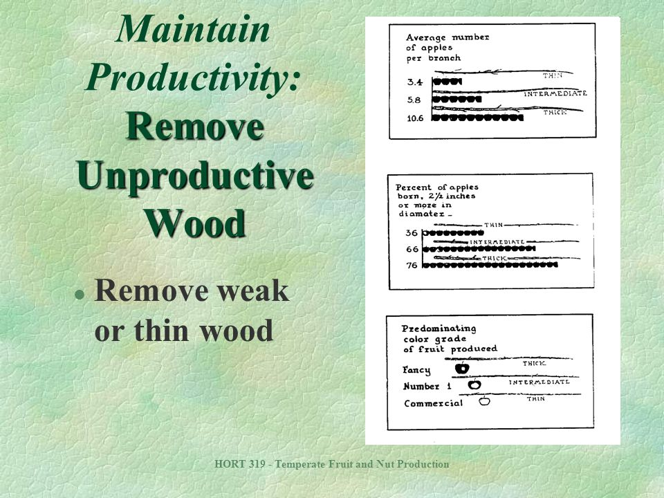 Maintain Productivity: Remove Unproductive Wood