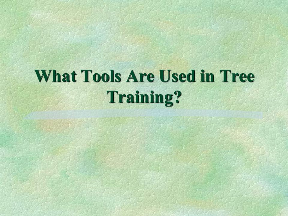 What Tools Are Used in Tree Training