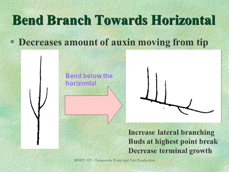 Bend Branch Towards Horizontal