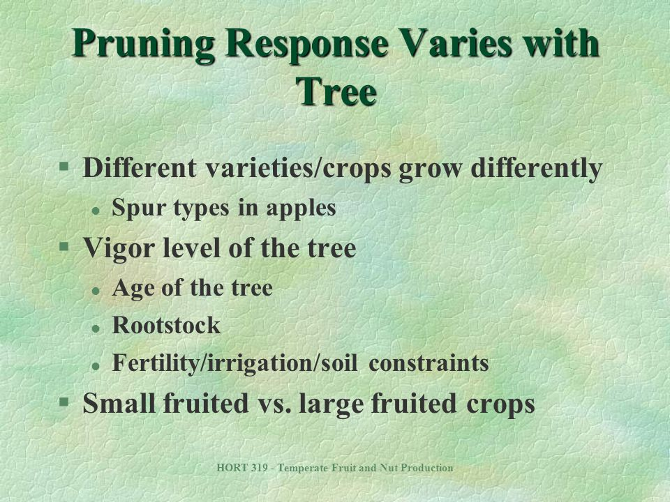 Pruning Response Varies with Tree