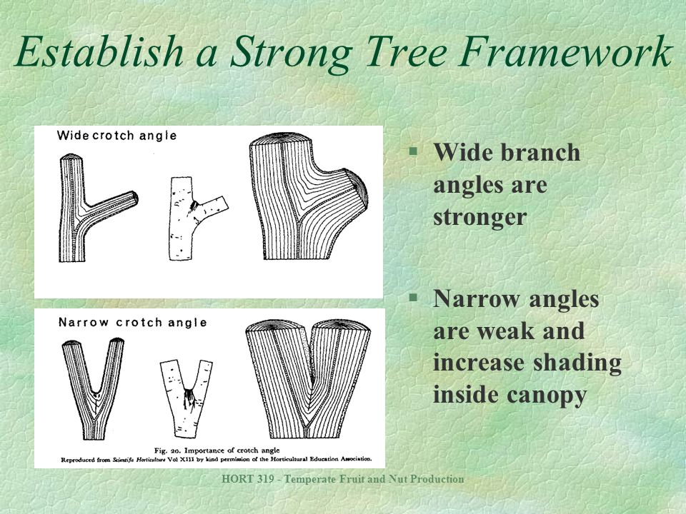 Establish a Strong Tree Framework
