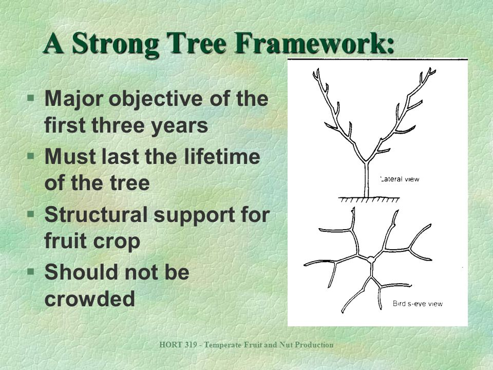 A Strong Tree Framework: