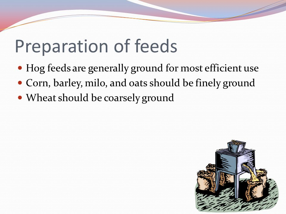 Preparation of feeds Hog feeds are generally ground for most efficient use. Corn, barley, milo, and oats should be finely ground.