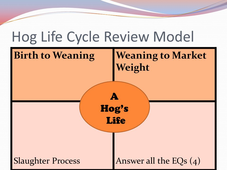 Hog Life Cycle Review Model