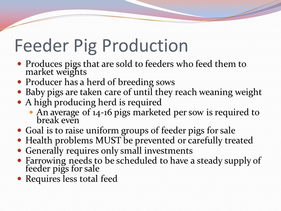 Feeder Pig Production Produces pigs that are sold to feeders who feed them to market weights. Producer has a herd of breeding sows.