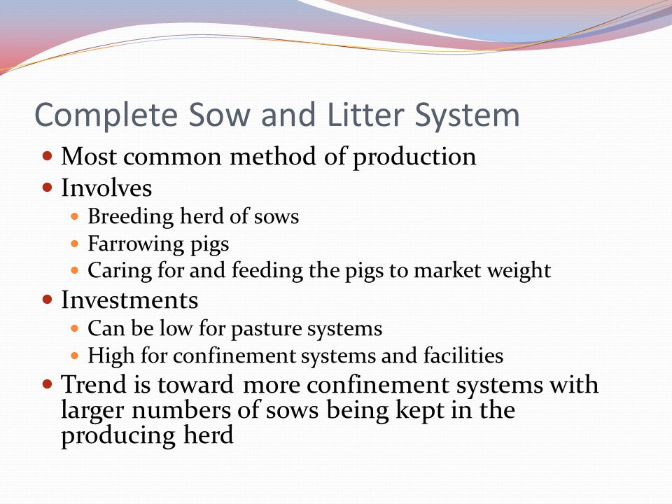Complete Sow and Litter System