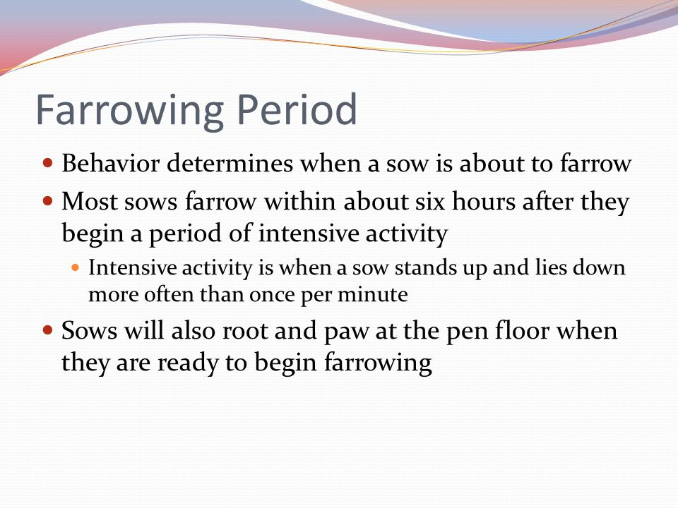 Farrowing Period Behavior determines when a sow is about to farrow