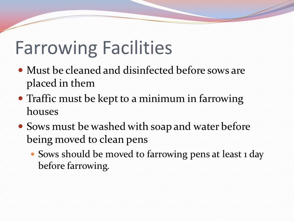 Farrowing Facilities Must be cleaned and disinfected before sows are placed in them. Traffic must be kept to a minimum in farrowing houses.