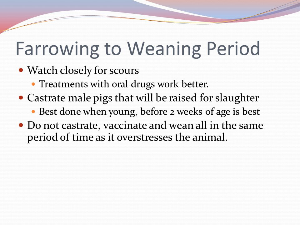 Farrowing to Weaning Period