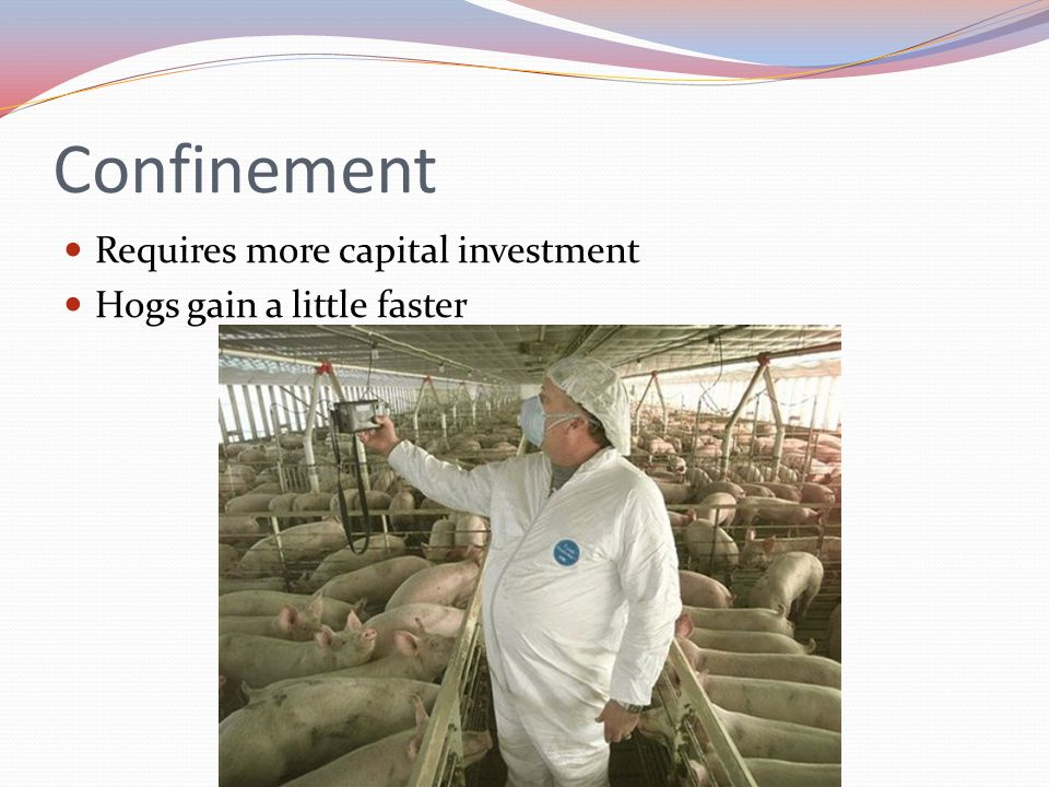 Confinement Requires more capital investment Hogs gain a little faster