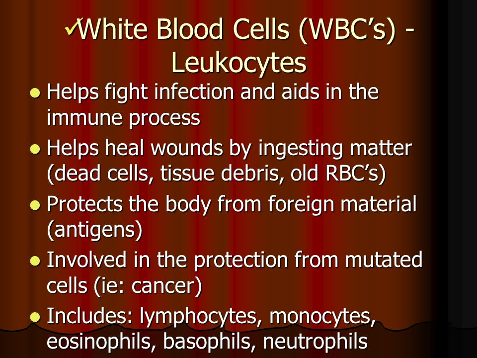 White Blood Cells (WBC's) - Leukocytes