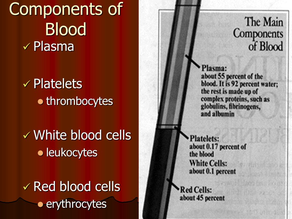 Components of Blood Plasma Platelets White blood cells Red blood cells