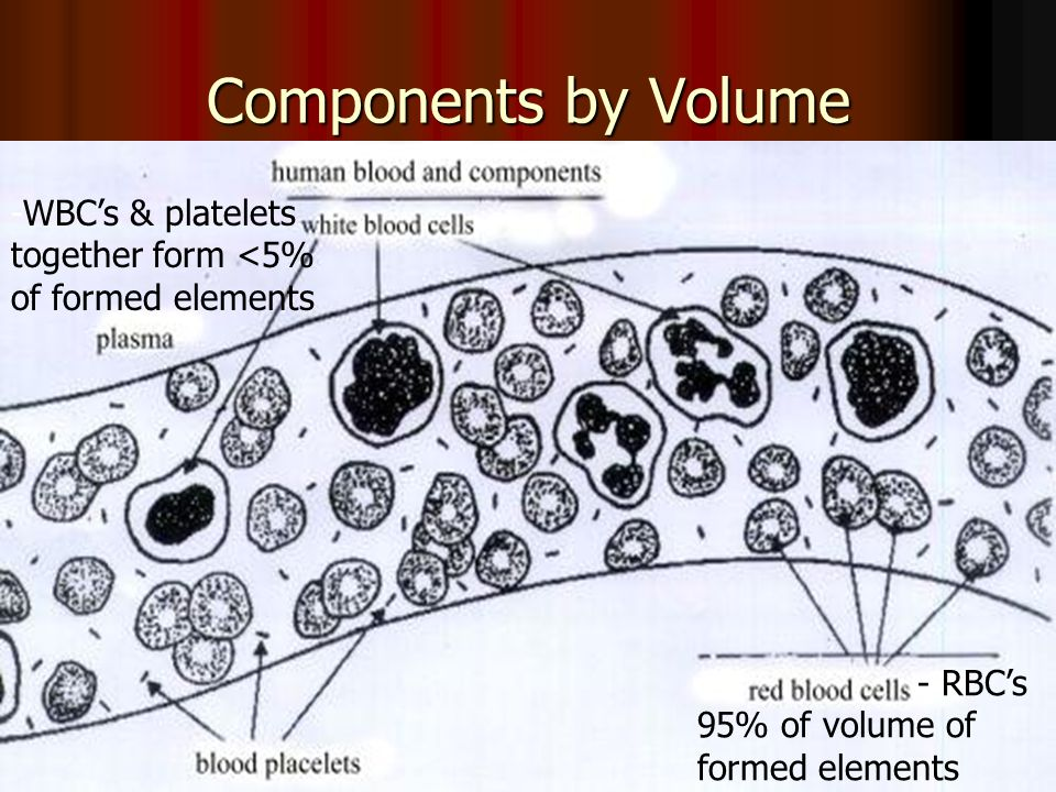 Components by Volume -WBC's & platelets together form <5%