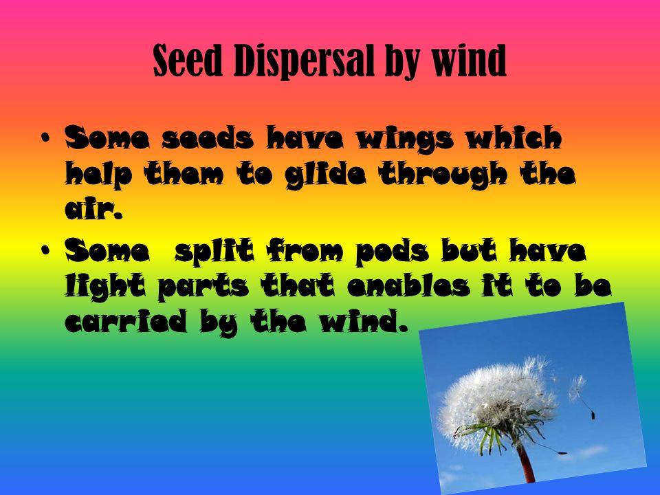 Seed Dispersal by wind Some seeds have wings which help them to glide through the air.