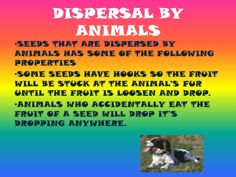 DISPERSAL BY ANIMALS SEEDS THAT ARE DISPERSED BY ANIMALS HAS SOME OF THE FOLLOWING PROPERTIES.