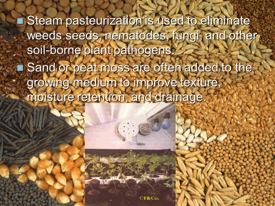 Steam pasteurization is used to eliminate weeds seeds, nematodes, fungi, and other soil-borne plant pathogens.