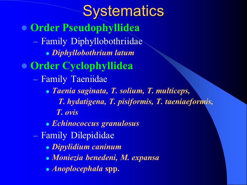 Systematics Order Pseudophyllidea Order Cyclophyllidea