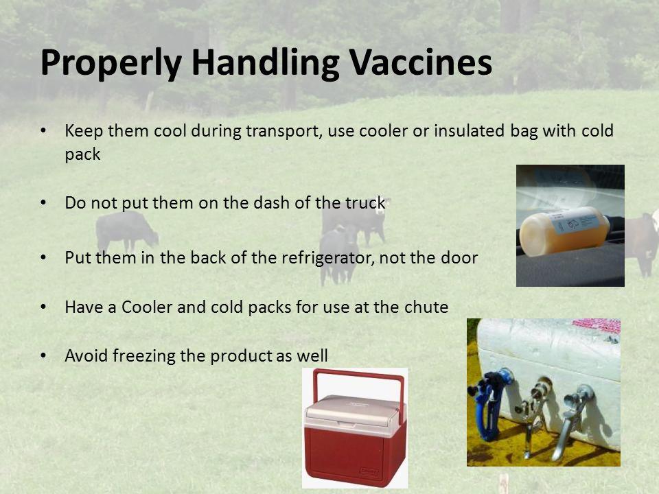 Properly Handling Vaccines