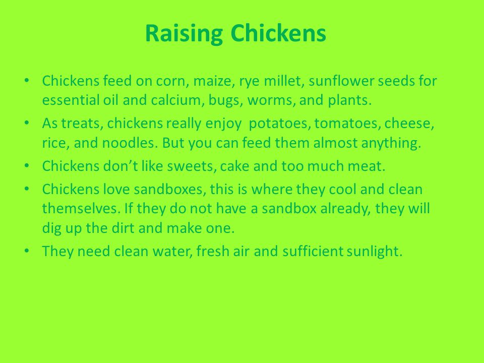 Raising Chickens Chickens feed on corn, maize, rye millet, sunflower seeds for essential oil and calcium, bugs, worms, and plants.