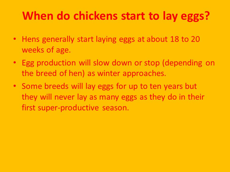 When do chickens start to lay eggs