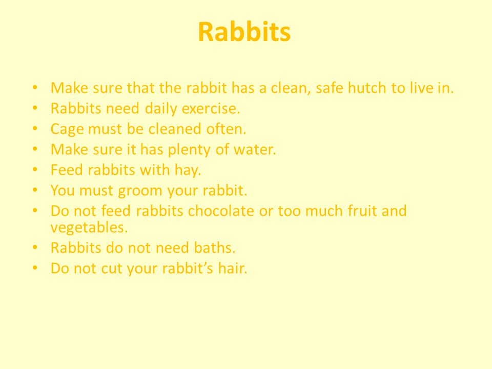 Rabbits Make sure that the rabbit has a clean, safe hutch to live in.