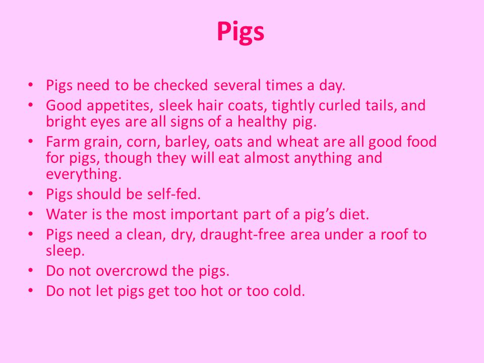 Pigs Pigs need to be checked several times a day.