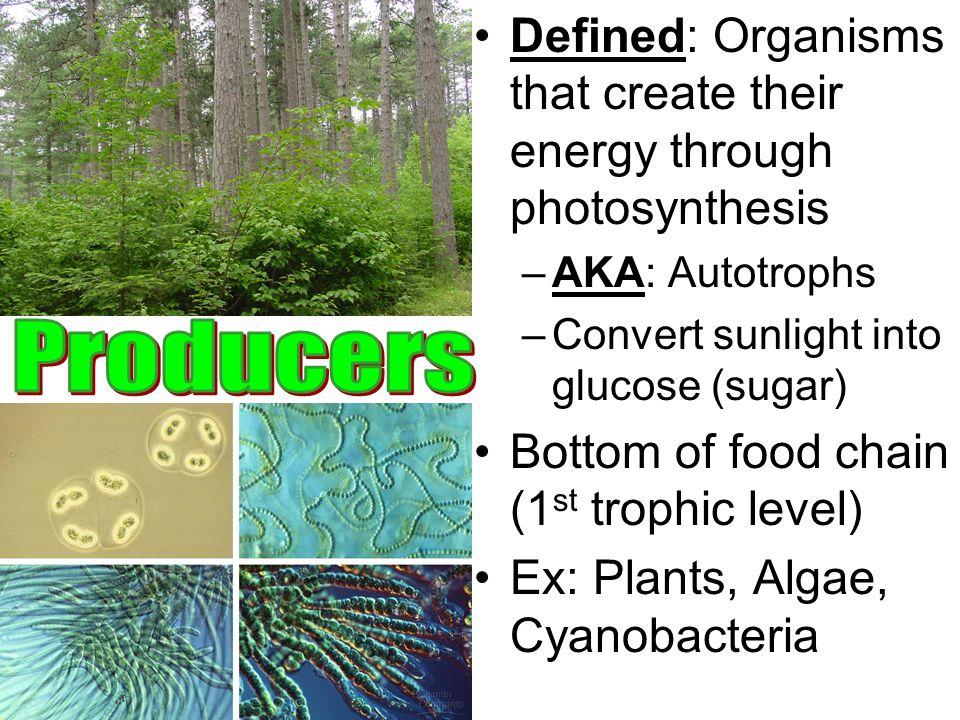 Defined: Organisms that create their energy through photosynthesis