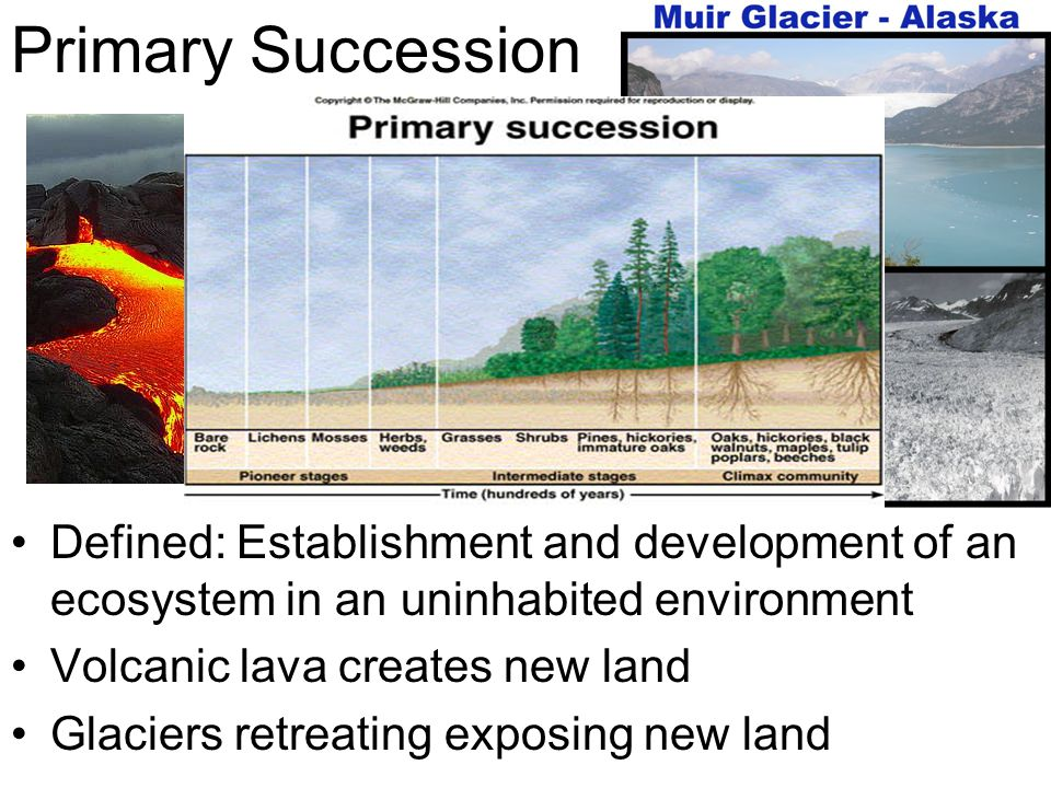 Primary Succession Defined: Establishment and development of an ecosystem in an uninhabited environment.
