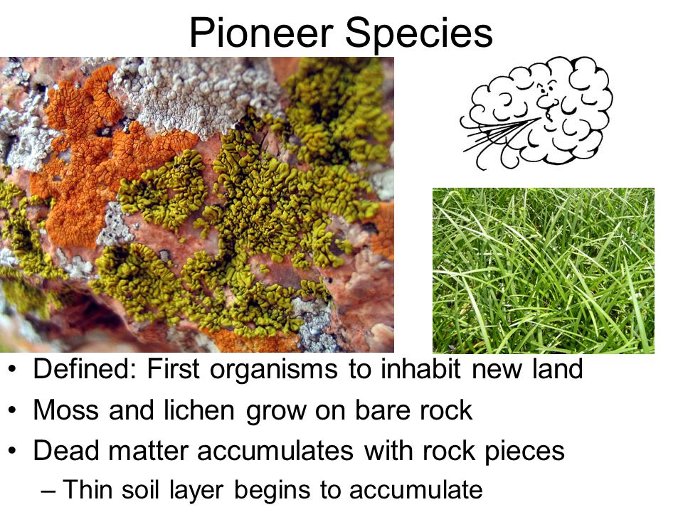 Pioneer Species Defined: First organisms to inhabit new land