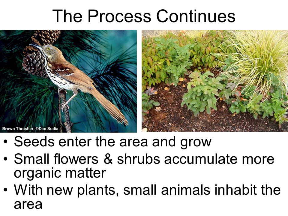 The Process Continues Seeds enter the area and grow