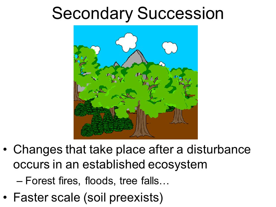 Secondary Succession Changes that take place after a disturbance occurs in an established ecosystem.