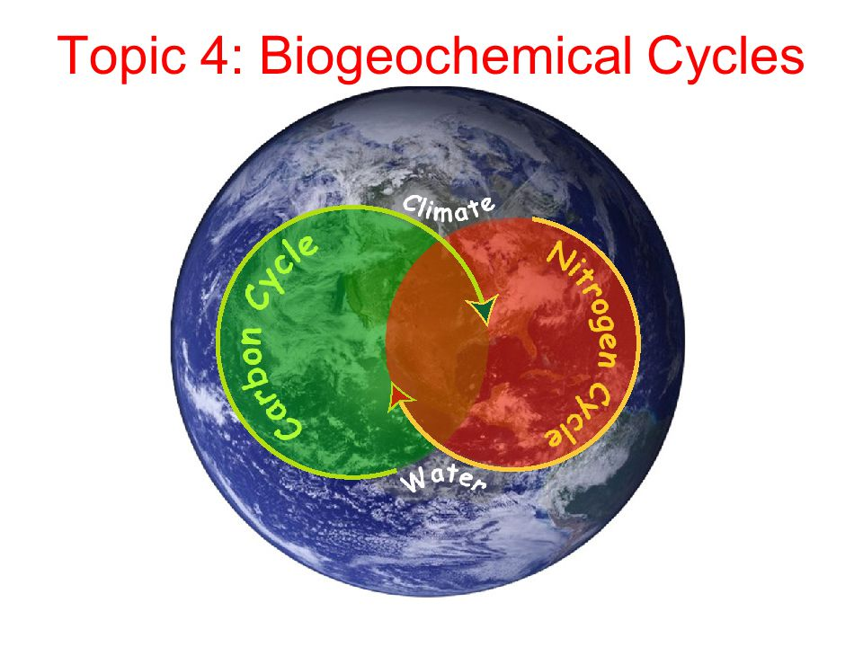 Topic 4: Biogeochemical Cycles