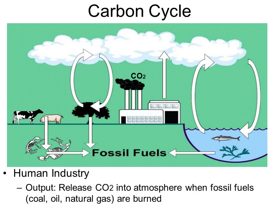 Carbon Cycle Human Industry