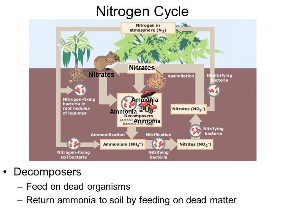 Nitrogen Cycle Decomposers Feed on dead organisms
