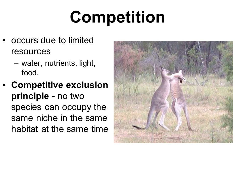 Competition occurs due to limited resources