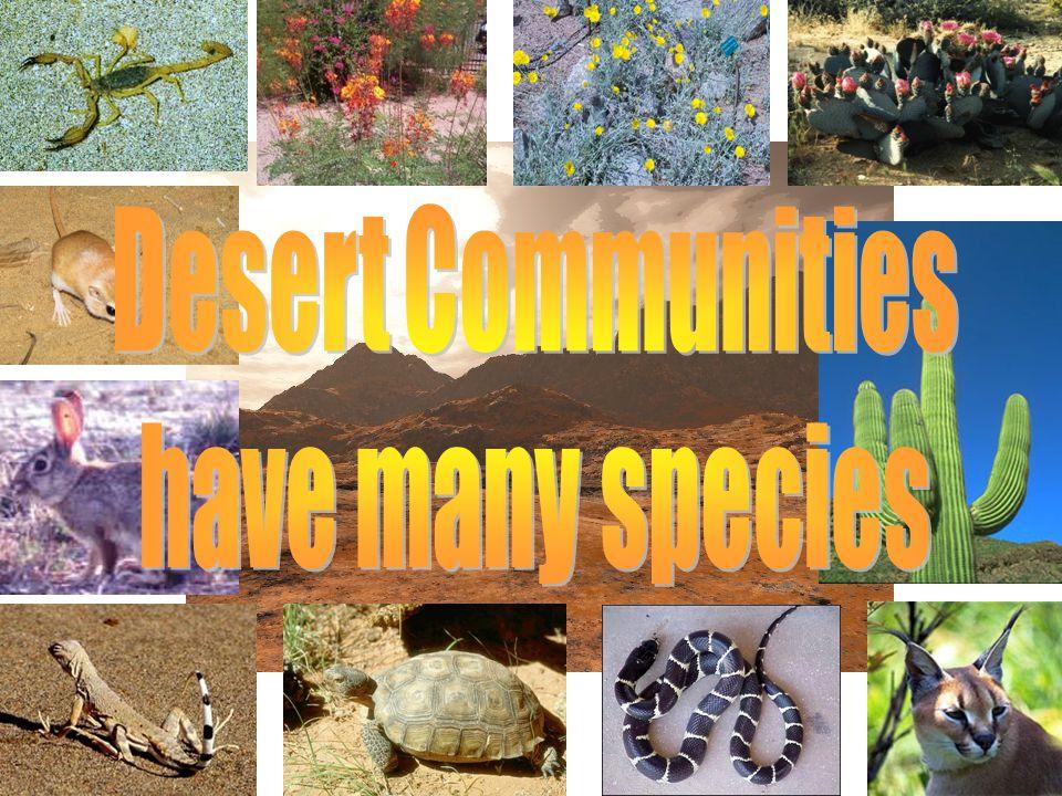 Desert Communities have many species